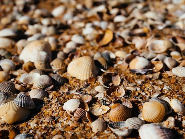ビーチの貝殻の海の風景をクローズアップ