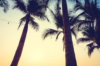 Beach sun summer tropical trees