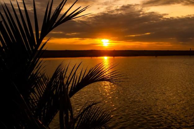 Пляжный закат пейзаж с силуэтом пальм