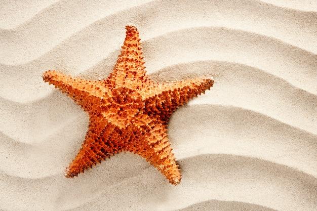 Beach white wavy sand starfish summer vacation