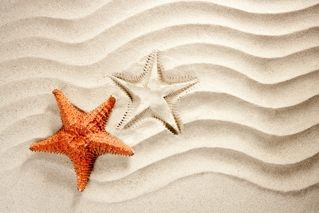 Beach white wavy sand starfish summer vacation