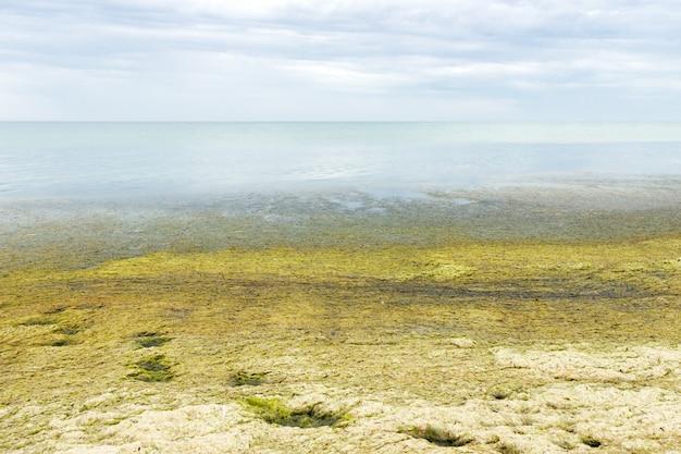 Пляж с зелеными водорослями на пляже. концепция экологии и стихийных бедствий