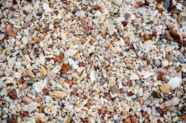 많은 오래된 조개와 컬러 스톤이 있는 해변