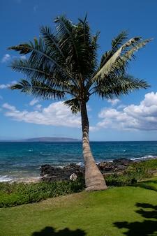 Пляж с пальмами и небом. летние каникулы путешествия праздник фон концепция. гавайский райский пляж.