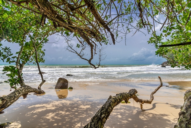 Beach with tree and blue sea and white sand