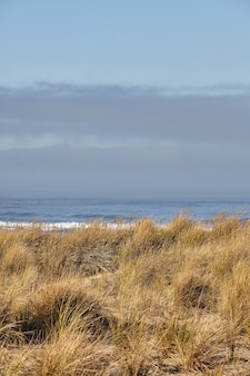 Beachgrass al mattino a cannon beach, oregon