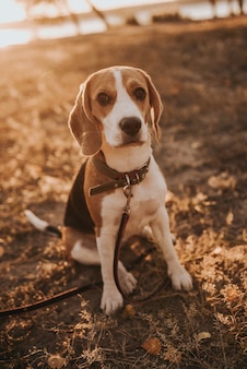 Гончая собака на земле