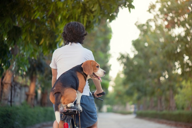 Beagle dog sits on a saddle behind a bicycle.