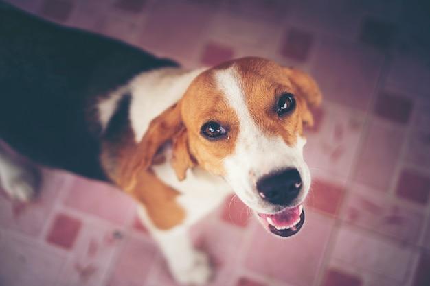 Собака-собачка