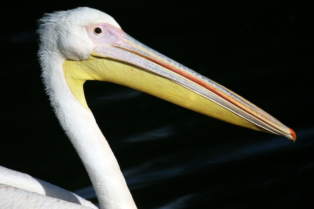 The beak of a pelican