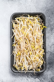 Bean sprout in black plastic container. top view