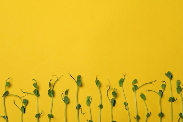 黄色の背景にもやし Premium写真