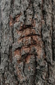 木の幹の樹皮にクマの爪跡。