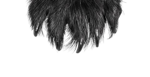 곰 발톱 흰색 배경 육식 동물 발톱