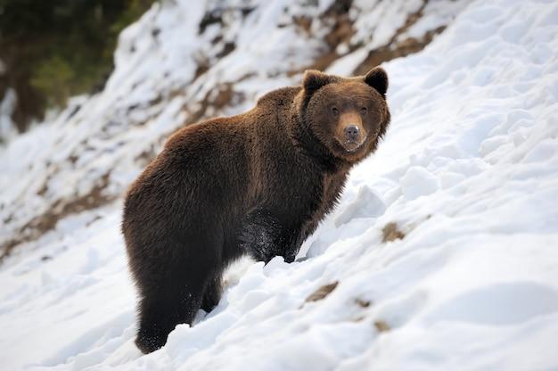 冬の森のクマ