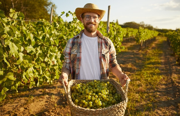 Bearded farmer carrying basket with grapes during harvest