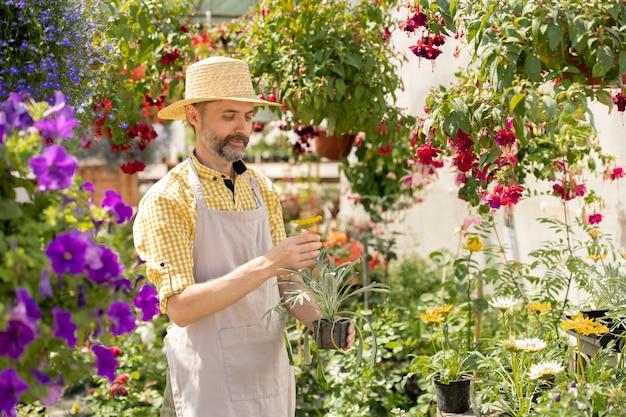 Бородатый фермер в шляпе и фартуке держит горшок с садовым цветком, стоя между клумбами в рабочий день