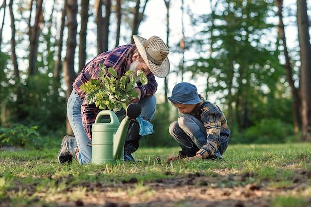 Бородатый дедушка с внуком на зеленой лужайке сажают саженец дуба и поливают водой.