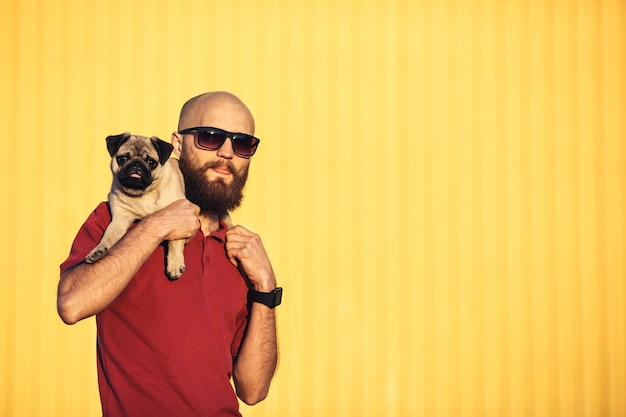 Bearded guy in sunglasses is holding pug puppy on his shoulders against background of yellow wall and showing tongues