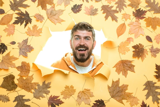 あごひげを生やした男が秋のセールの準備をしています。すべての秋の服の割引。秋の服の販売。秋のコンセプト。黄金の葉を持つ季節の服を着た魅力的な若い男。面白い表現。