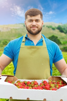 Bearded middle-aged man standing in a strawberry field with a box of fresh strawberries