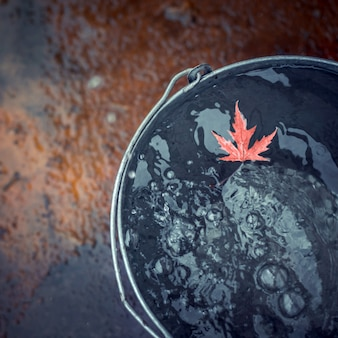 A beatiful red maple leaf floats in a tin bucket on the water surface