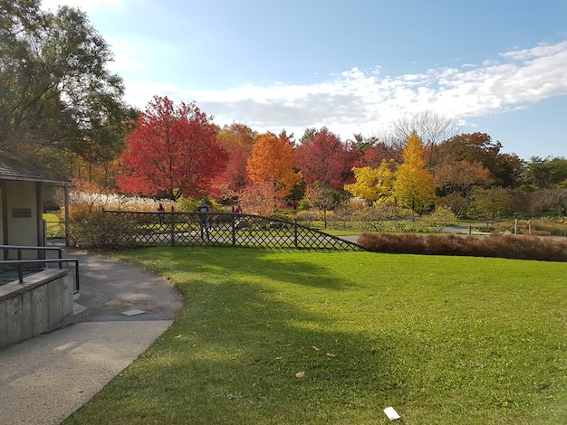 公園の美しい赤と黄色の木