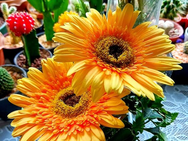 黄色いガーベラの花の美しい花束