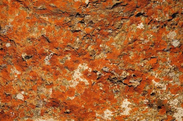 흰색 돌 밝은 색상에 붉은 이끼가 있는 배경을 위한 아름다운 추상 화려한 질감...