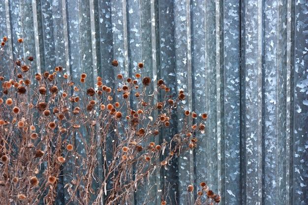 장식 디자인 정원 배경을 위한 말린 무성한 가을 꽃과 함께 아름다운 추상 패턴