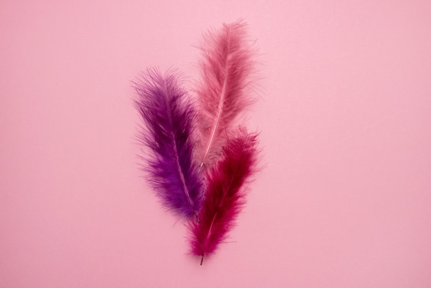 Beautiful abstract pink and purple feathers on pastel background and soft white pink feather texture on colorful pattern, colorful background, colorful feather top view