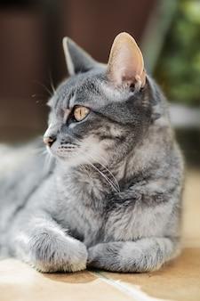 Красивая взрослая кошка сидит дома расслабляясь и смотрит в сторону.