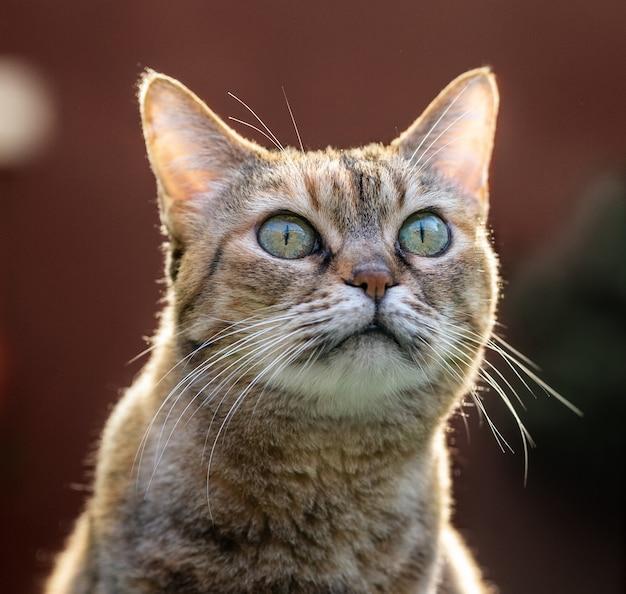 아름 다운 성인 고양이 편안 하 고 앞을 보고 정원에 앉아.