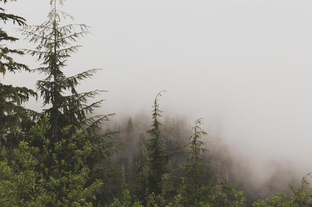 Beautiful aerial shot of a foggy forest