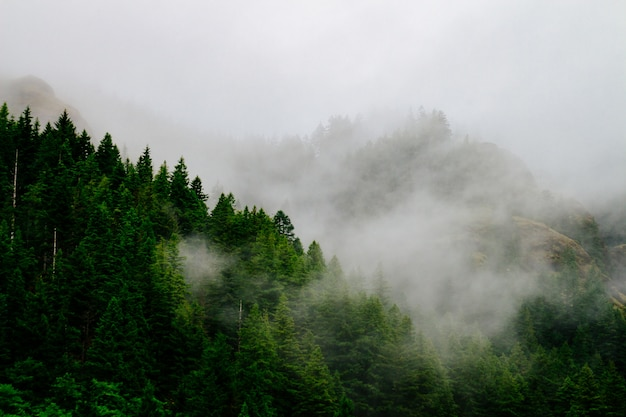 Beautiful aerial shot of a forest enveloped in creepy mist and fog