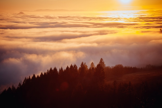Beautiful aerial shot of a forest on a hill with beautiful mist in the distance shot at sunrise