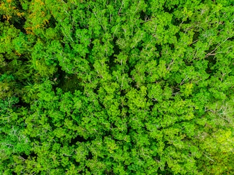 Beautiful aerial view of nature trees in the forest