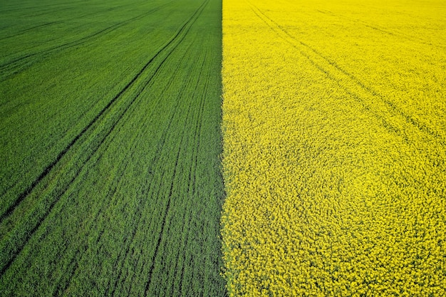 Красивое сельскохозяйственное наполовину зеленое наполовину желтое поле травы снято с дроном