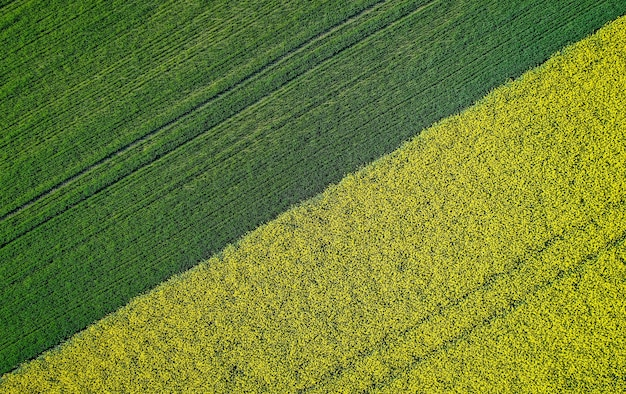Beautiful agricultural half green half yellow grass field shot with a drone