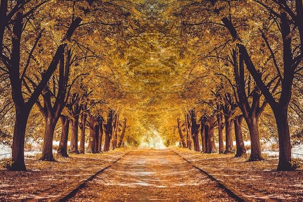 色とりどりの木々、秋の風景のある公園の美しい路地。絵のように美しいオレンジ色の秋の森のある庭の歩道