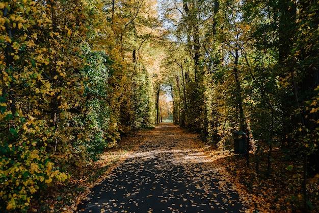 カラフルな木が秋の公園の美しい路地
