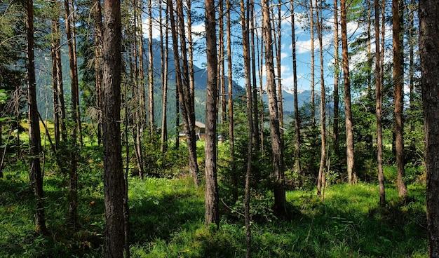 Красивый альпийский пейзаж с зелеными лугами, альпийскими коттеджами и горными вершинами, лехталь, лех, австрия