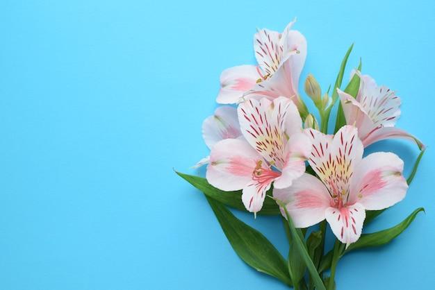 Красивые цветы альстромерии