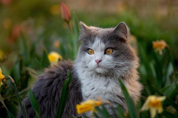 자유 야외를 즐기는 아름다운 놀라운 고양이