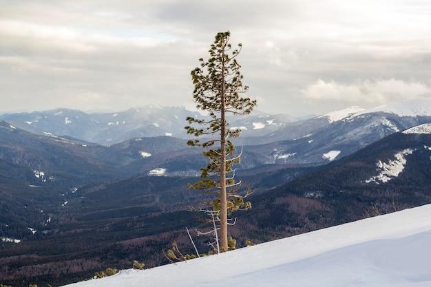 美しい驚くべき広い視野の冬の風景。曇り空と木質の山々のパノラマのコピースペースの背景に寒い凍るような晴れた日に深い雪の山の急な斜面に一人で背の高い松の木。