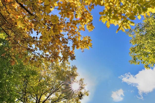 푸른 하늘에 다양한 나무의 아름답고 화려한 단풍