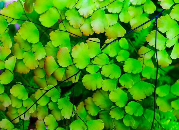 背景のための美しくカラフルな熱帯の緑の葉