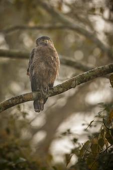인도 아삼의 카지랑가에서 온 아름답고 멋진 새들