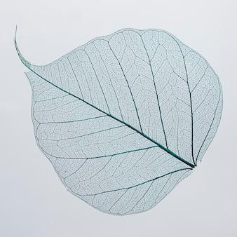 아름답고 상세한 매크로 잎