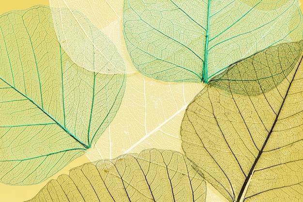 Красивый и подробный макро лист